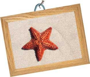 étoile de mer rouge encadrée