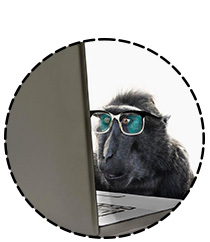 Un singe quelque peu dubitatif observe un ordinateur